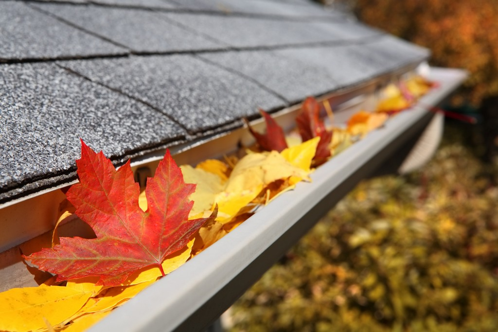 fall autumn Leaves in a rain gutter
